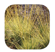Midwest Ornamental Grasses